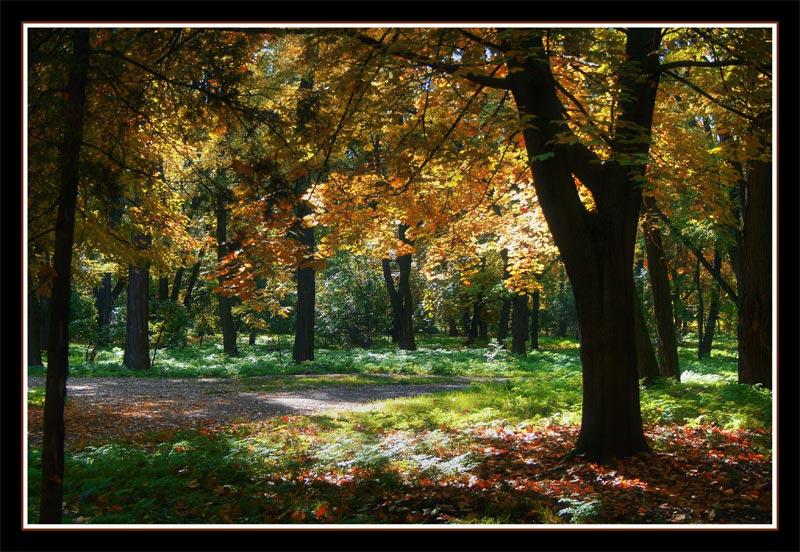 "фото ""Осень золотая"" метки: пейзаж, лес, осень"