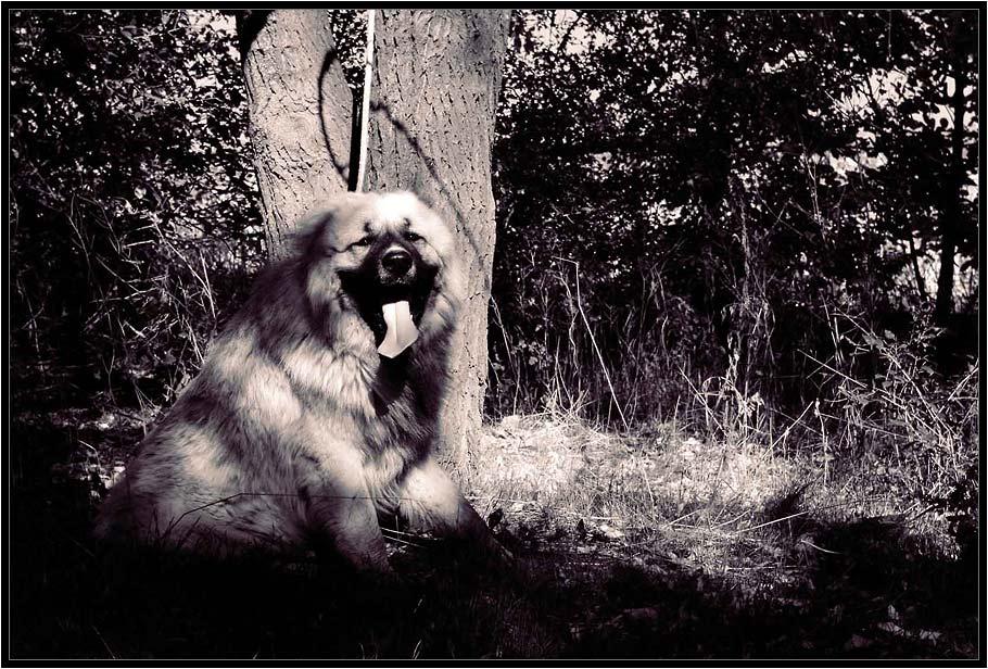 "photo ""Noks"" tags: nature, genre, pets/farm animals"
