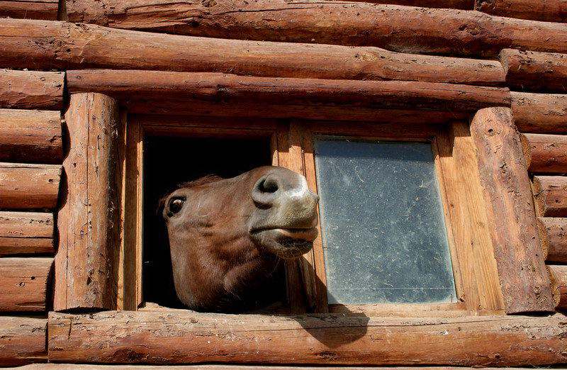 "фото ""what is outside..."" метки: портрет, природа, домашние животные"