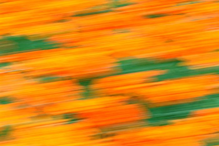 "фото ""HAPPY BIRTHDAY SILVIA MARMORI"" метки: природа, абстракция, цветы"