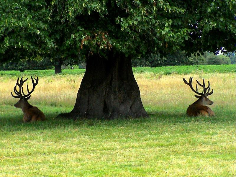 """фото """"Три богатыря."""" метки: природа, путешествия, Европа, дикие животные"""
