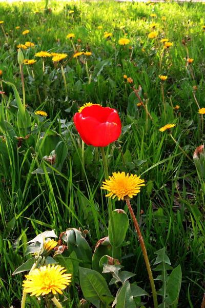 """фото """"Чужой"""" метки: природа, город, цветы"""