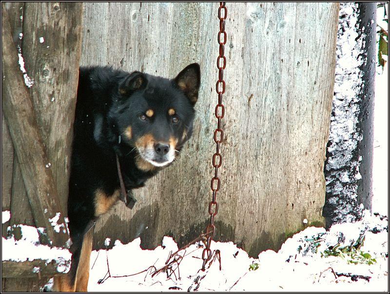 """photo """"Let's winter, man!"""" tags: genre, nature, pets/farm animals"""