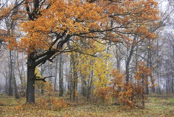 """photo """"Octorer"""" tags: landscape, autumn"""