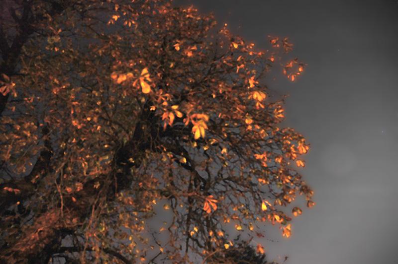 """фото """"Golden Tree"""" метки: пейзаж, абстракция, ночь"""