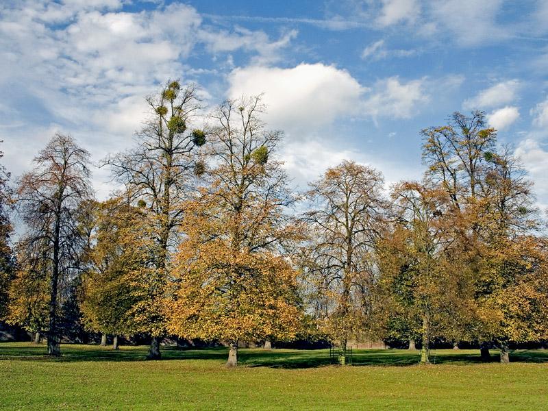 """photo """"Mistletoe On Trees"""" tags: landscape,"""