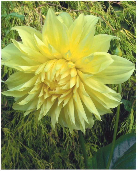 """фото """""""" Limelight """""""" метки: природа, макро и крупный план, цветы"""