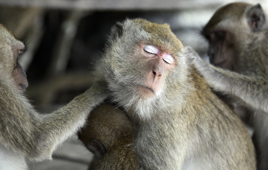 """фото """"А еще у меня белые тени !"""" метки: природа, путешествия, Азия, дикие животные"""