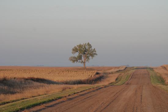 "фото ""There is a Tree"" метки: пейзаж,"