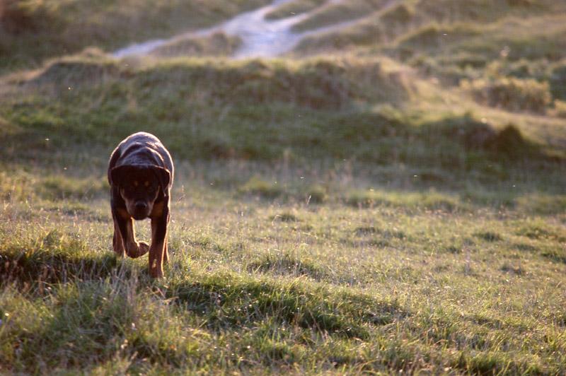 """фото """"The hunt."""" метки: пейзаж, природа, дикие животные, осень"""
