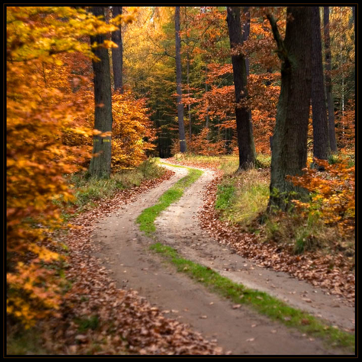 """photo """"* Forest Paths *"""" tags: landscape, forest"""