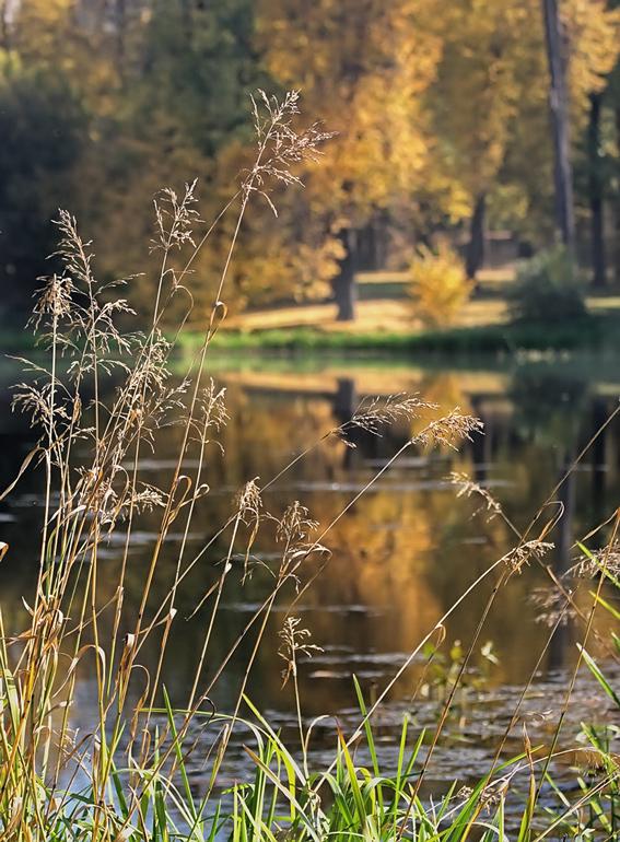 """photo """"****"""" tags: landscape, autumn"""