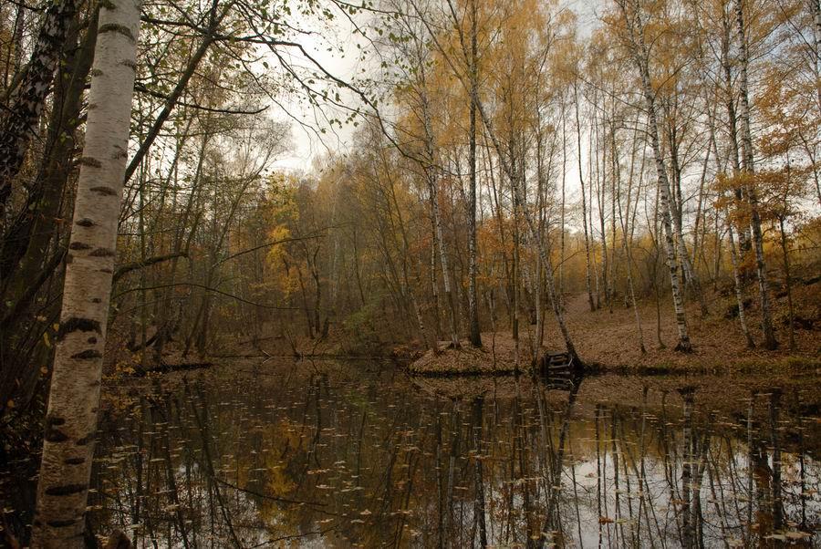 """фото """"Осеннее настроение..."""" метки: пейзаж, осень"""