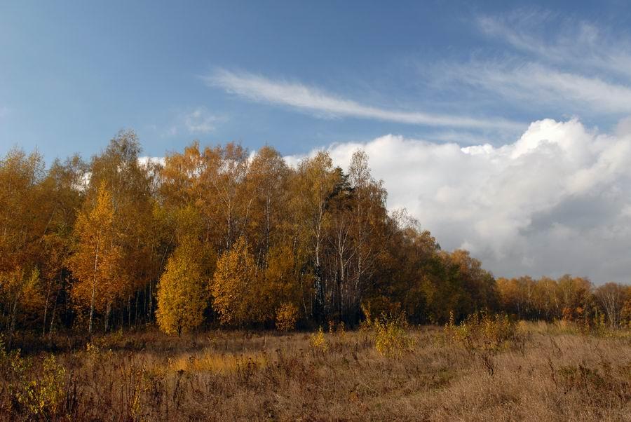"""фото """"Подмосковная осень..."""" метки: пейзаж, осень"""