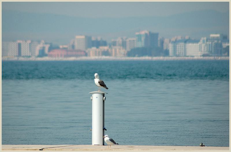 """фото """"Sea-gulls"""" метки: природа, путешествия, Европа, дикие животные"""