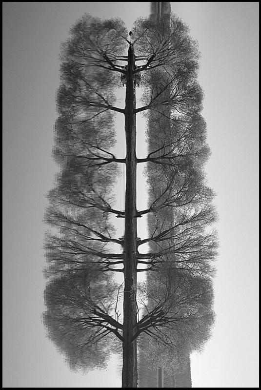 """фото """"Дерево деревьев"""" метки: пейзаж, осень"""