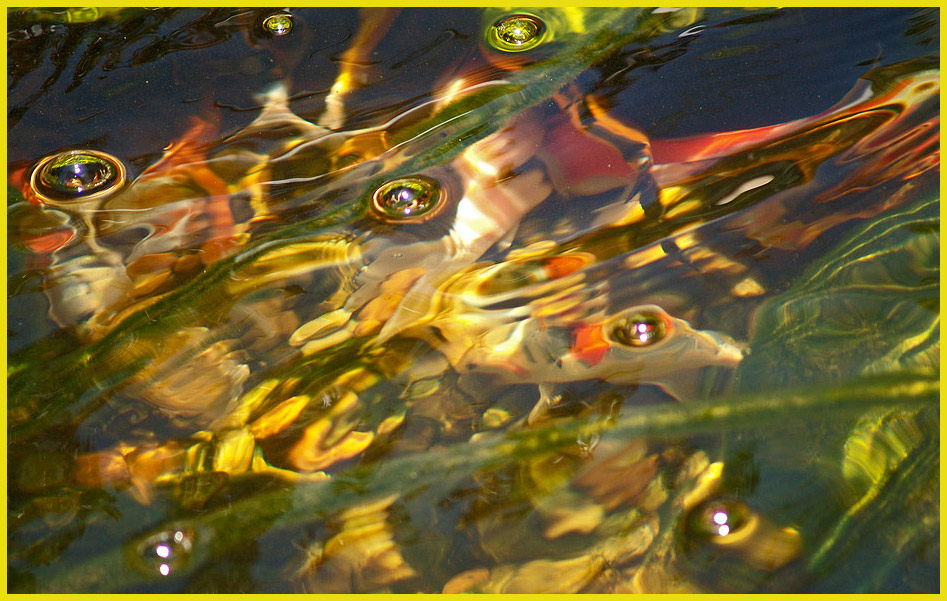 "photo ""Fish Impressiоns"" tags: nature, abstract, wild animals"