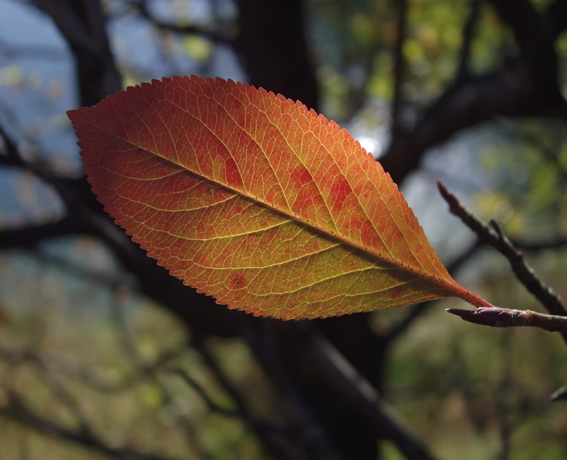 "photo ""Easy leaf"" tags: landscape, nature, autumn, flowers"