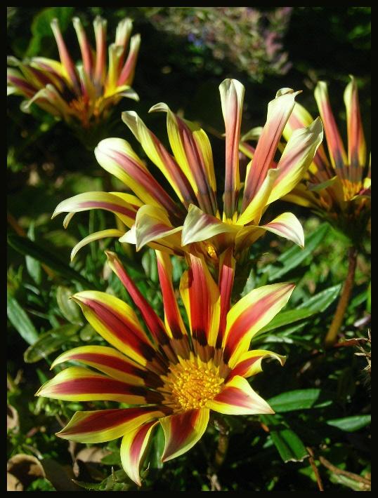 """фото """"Indian summer"""" метки: природа, макро и крупный план, цветы"""