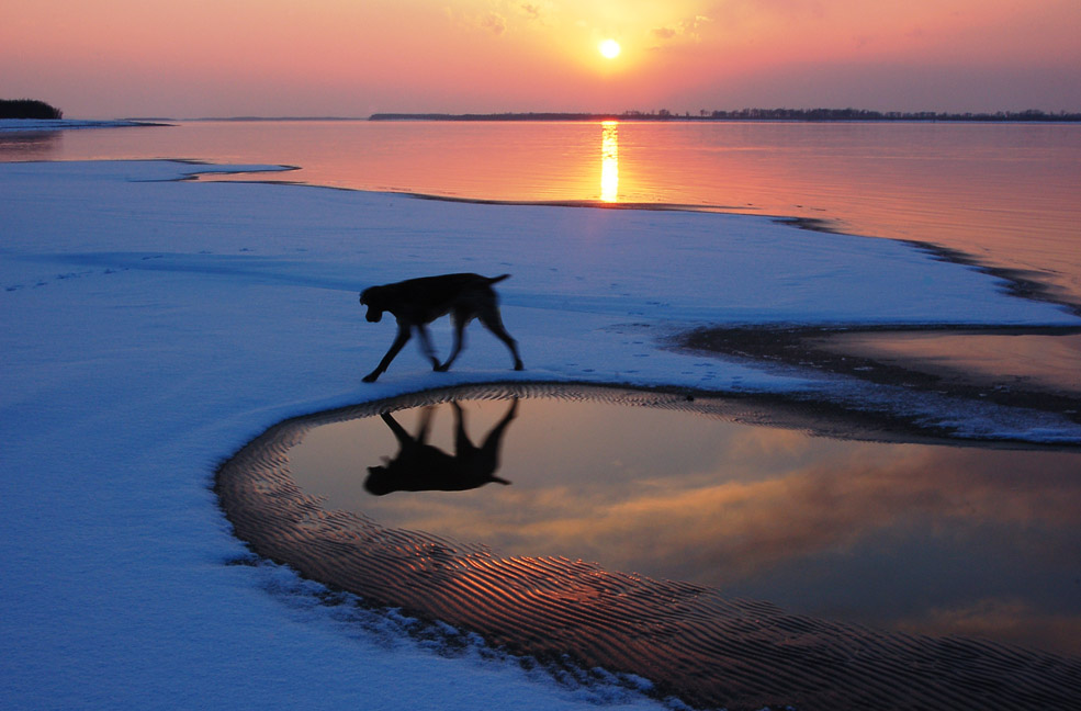 "photo ""black dog, running edge of a cloud"" tags: landscape, sunset"
