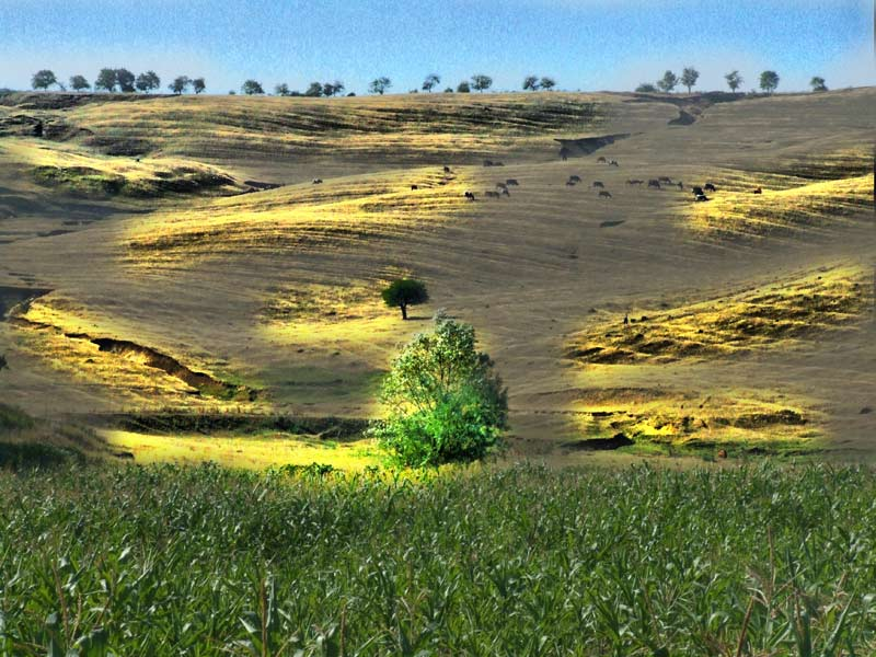 """фото """"Vara nostalgie"""" метки: пейзаж, лето"""
