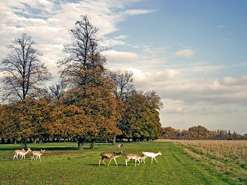 """photo """"Deer in Field"""" tags: landscape,"""