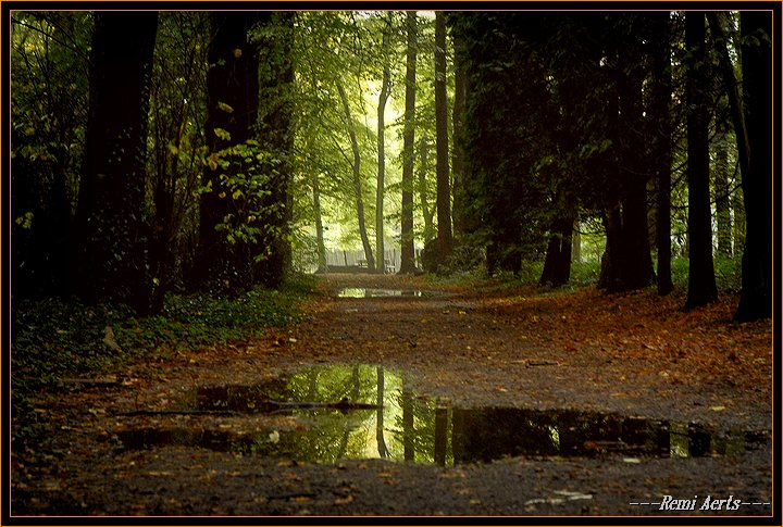 "фото ""after the rain"" метки: пейзаж, лес"