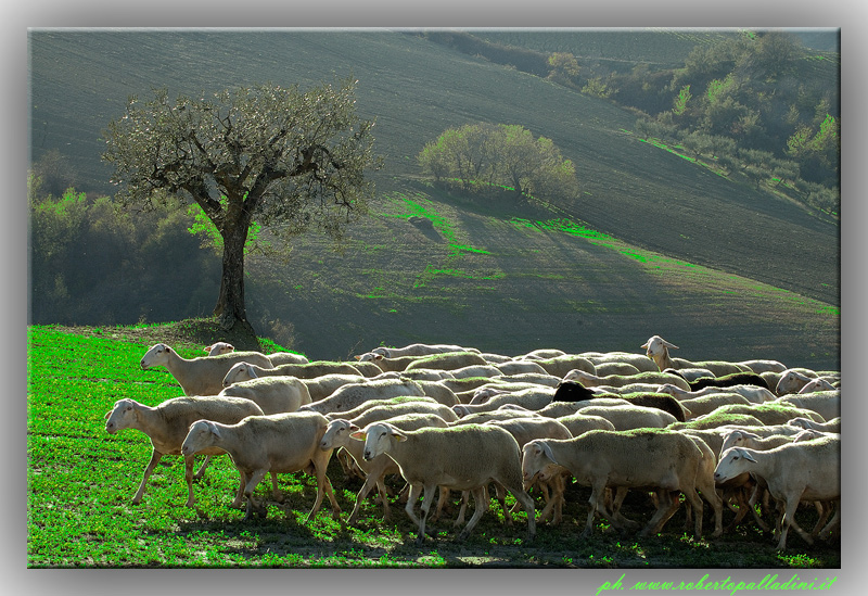 """фото """"Rural landscape"""" метки: ,"""