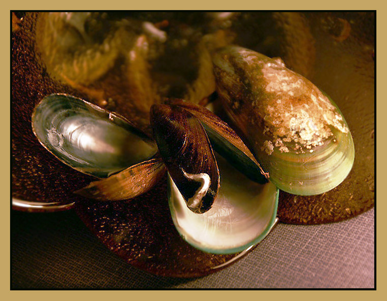 """photo """"Still life with mussels"""" tags: still life, abstract,"""