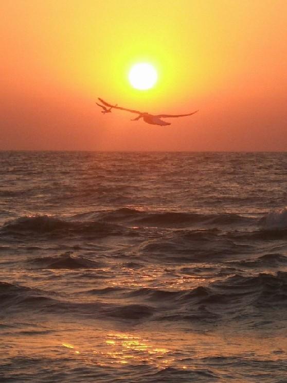 "фото ""свобода"" метки: пейзаж, закат"