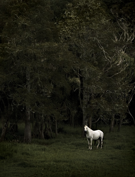 "photo ""Fairy tale"" tags: nature, travel, pets/farm animals"