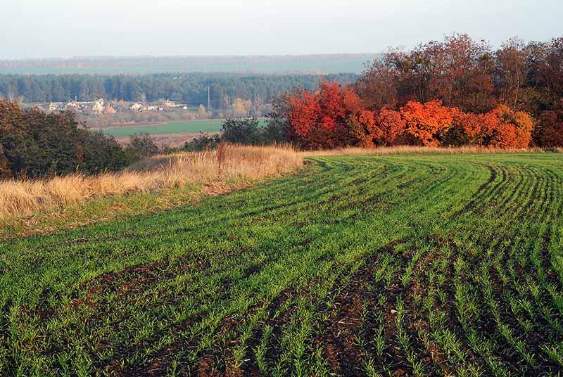 """фото """"Осеннее разноцветье"""" метки: пейзаж,"""