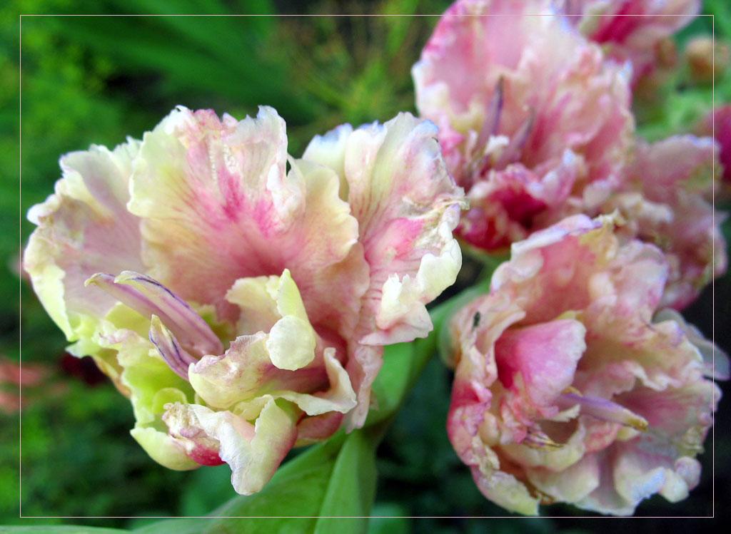 """фото """"Когда отцветают цветы..."""" метки: природа, макро и крупный план, цветы"""