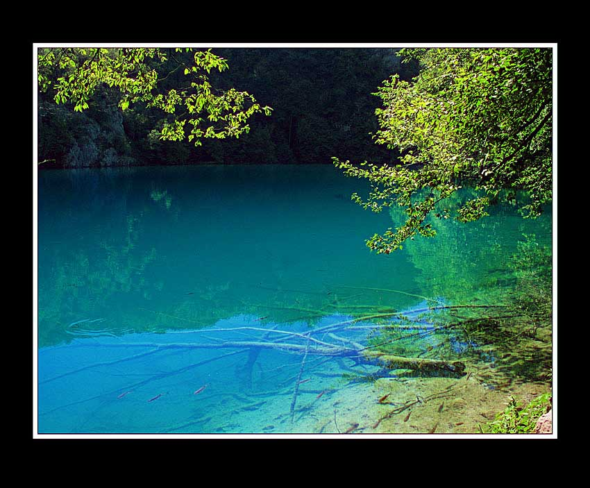 "photo ""Plitvice"" tags: landscape, forest, water"