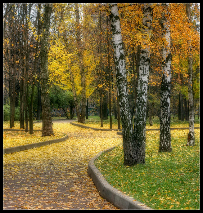 "photo ""Yelow autumn"" tags: landscape, autumn, forest"