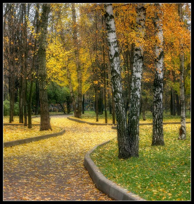 "photo ""Yelow autumn"" tags: landscape, autumn, forest"