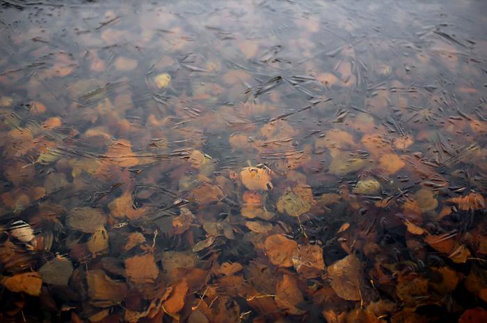 """фото """"#0156"""" метки: пейзаж, осень"""
