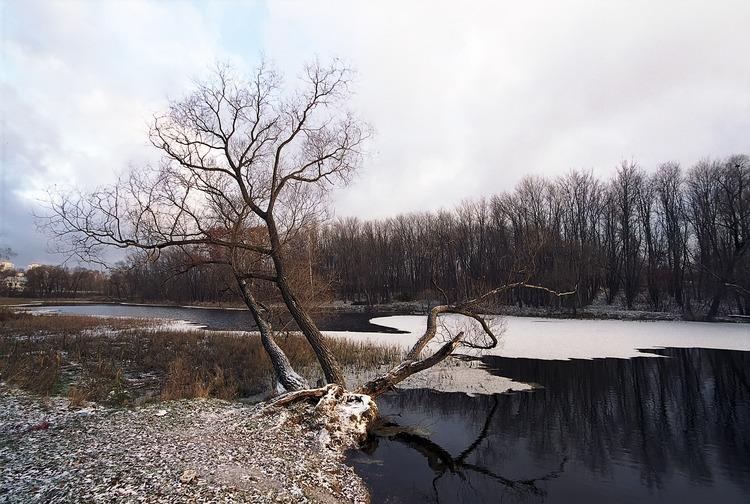 """фото """"этюд с деревом"""" метки: пейзаж, вода, осень"""