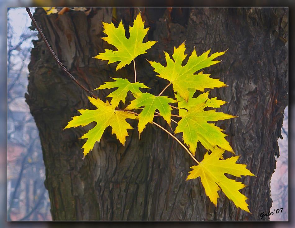 "photo ""Last leaves"" tags: landscape, autumn"