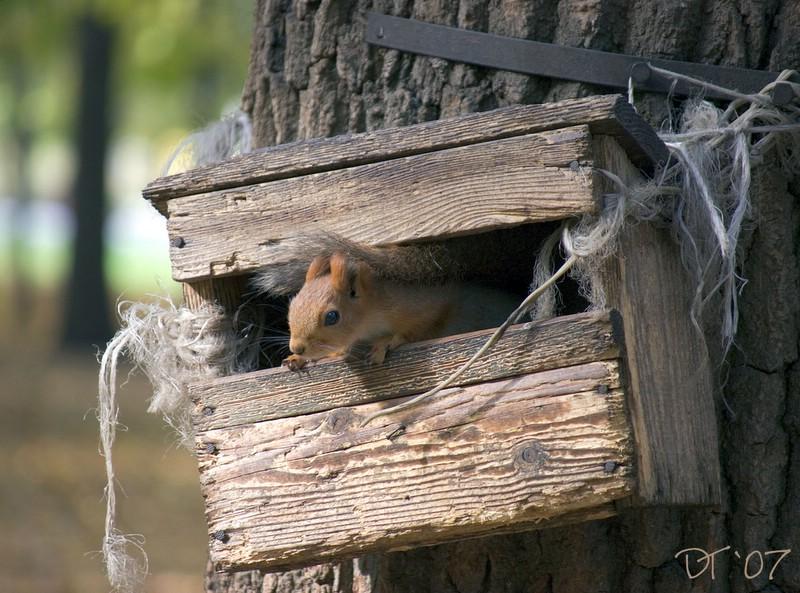 """фото """"Ветхое жильё 2007-2008..."""" метки: природа, дикие животные"""
