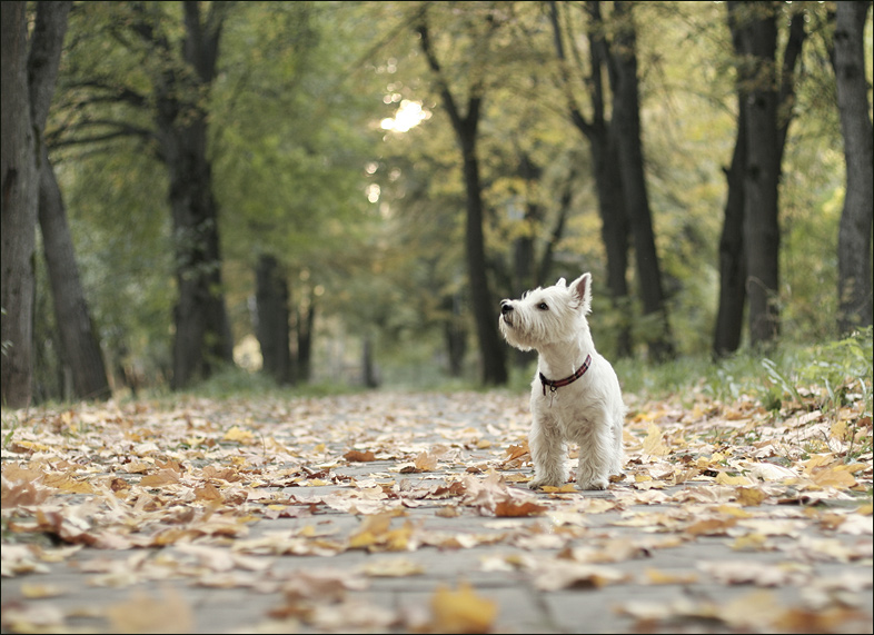 "photo ""dog's first fall"" tags: misc.,"