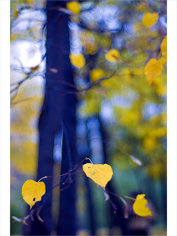 """photo """"autumn colours"""" tags: landscape, nature, autumn, flowers"""