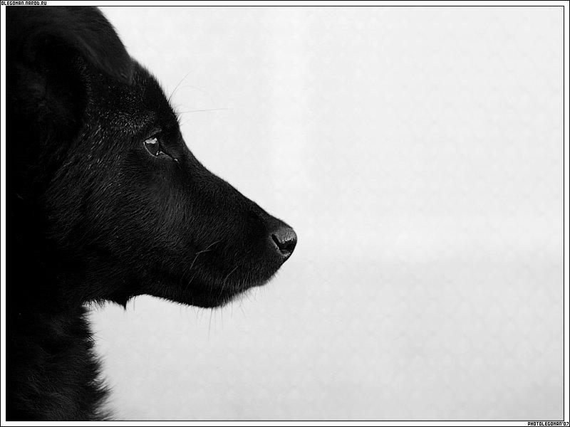 """photo """"Devotion"""" tags: nature, pets/farm animals"""
