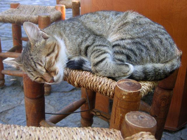 """фото """"Спящая...."""" метки: природа, жанр, домашние животные"""