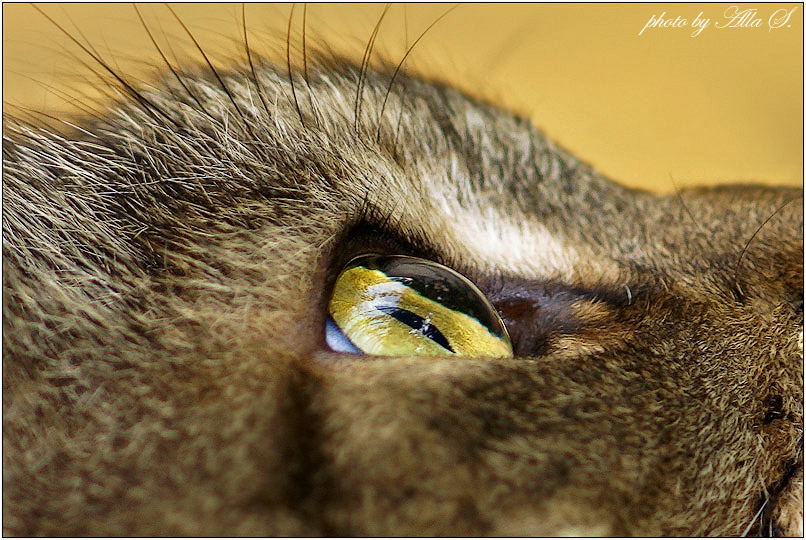 """фото """"Глаз - алмаз"""" метки: макро и крупный план, природа, дикие животные"""