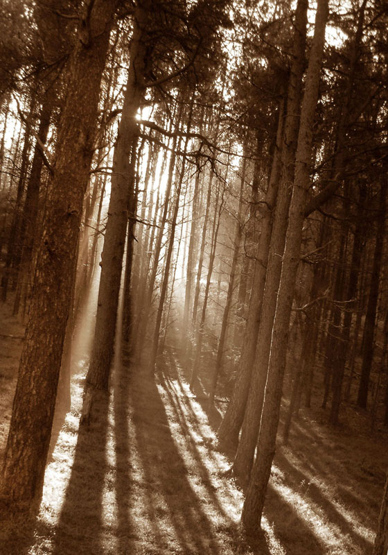 "photo ""In to the Light"" tags: landscape, forest"