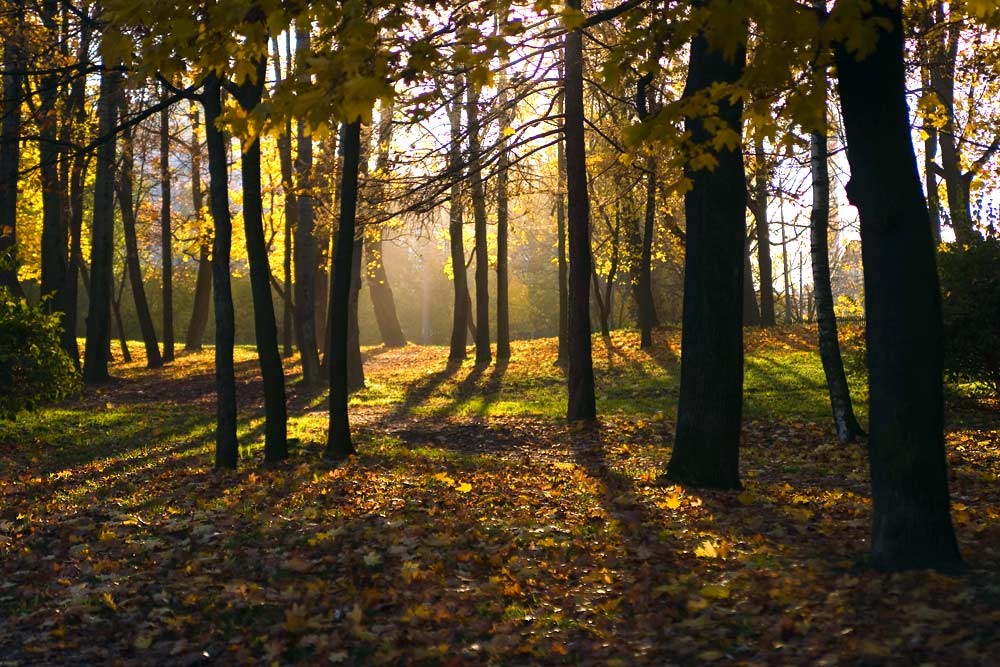 "photo ""Sunny October. Petersburg."" tags: landscape, autumn, forest"