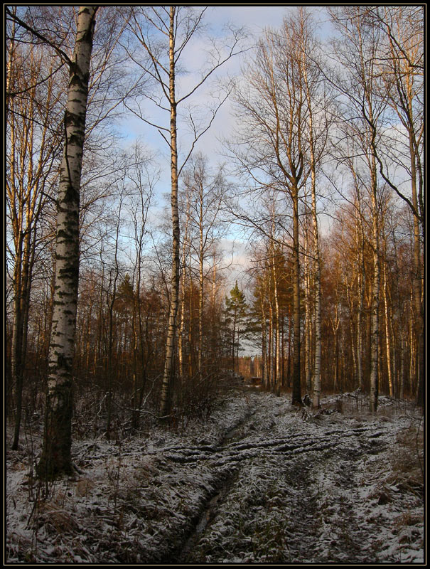 "photo ""***"" tags: landscape, forest"