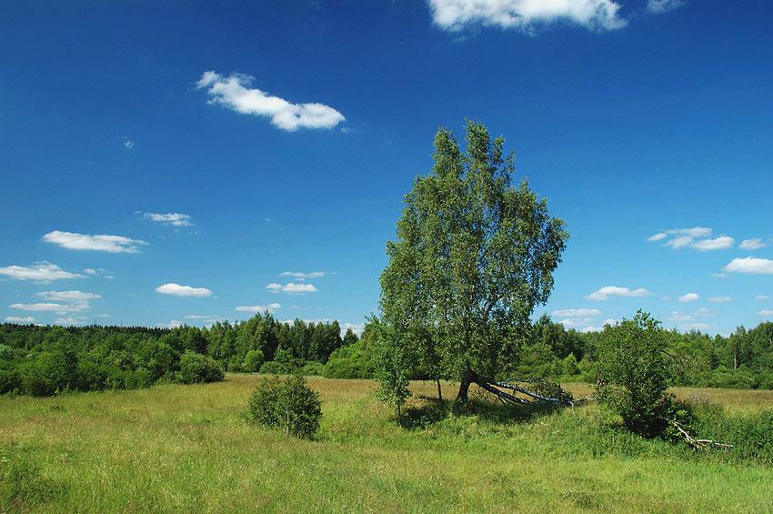 """фото """"Подмосковный пейзаж"""" метки: пейзаж, лето"""