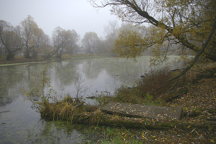 "photo ""Утро на пруду."" tags: landscape, autumn, water"